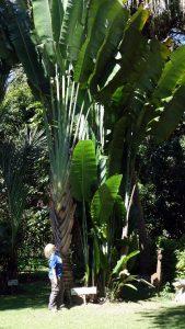 Pflanzen Kapishya Hot Springs