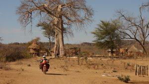Dorf mit Baobab